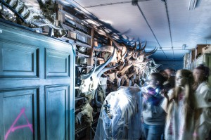 Taschenlampenführung im Tierarchiv im nautrkudnemseuum Berlin