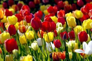 Britzer Garten im Frühling | Foto: dpa