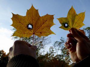 Den Herbst im Schlossgarten Charlottenburg genießen | Foto: naturtrip.org