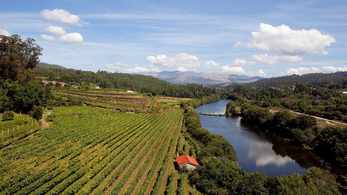 Die Weinregion Vinho Verde | Foto: CVRVV